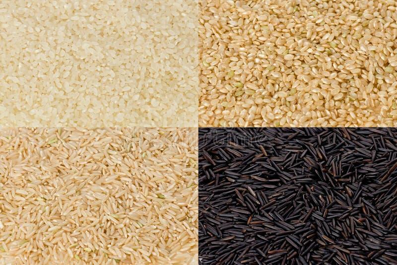 groszkuje ryż obrazy royalty free