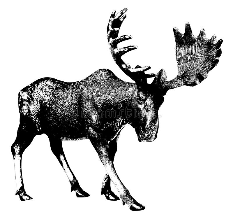 Grote Amerikaanse elanden stock illustratie
