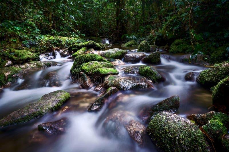 Grote bemost op de rots en langzaam blind voor de waterstroom stock foto's