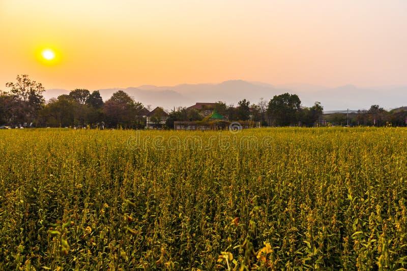 Grote berg in de verontreinigingsmist, Chiang Mai Thailand royalty-vrije stock afbeelding