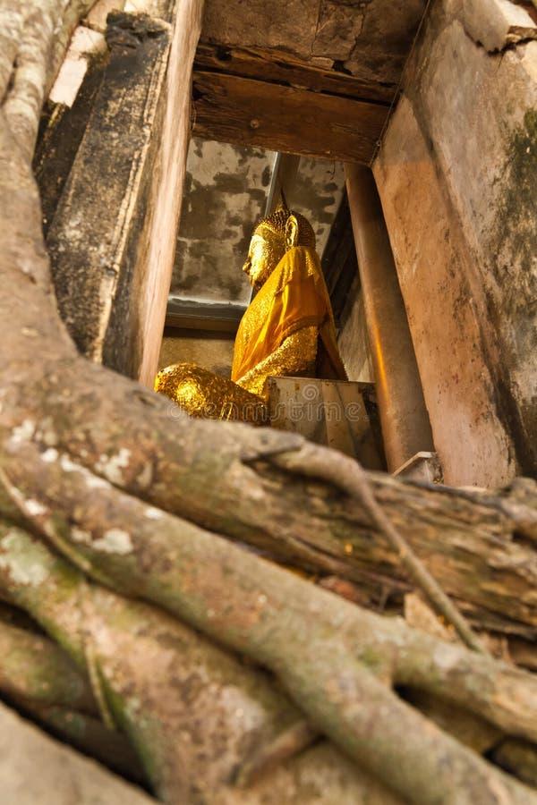 Grote Boedha in kerkdekking door oude grote boomwortel stock foto's