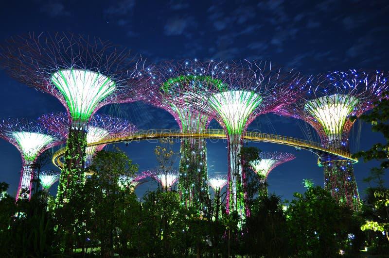 Grote bomen met opgeheven skyway 's nachts royalty-vrije stock fotografie