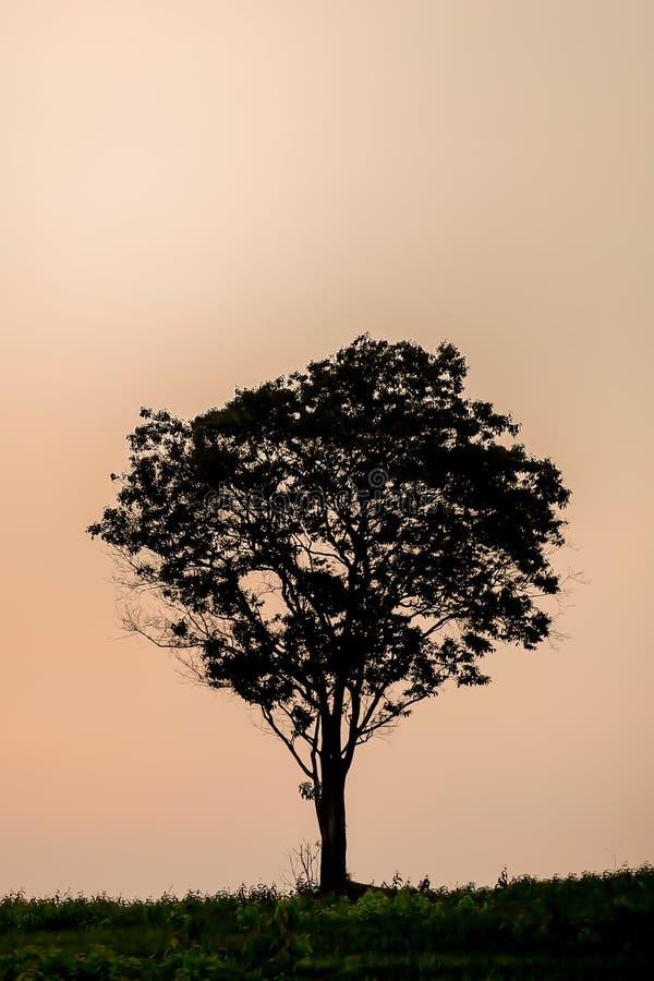 Grote bomen op de kleurenhemel royalty-vrije stock foto's