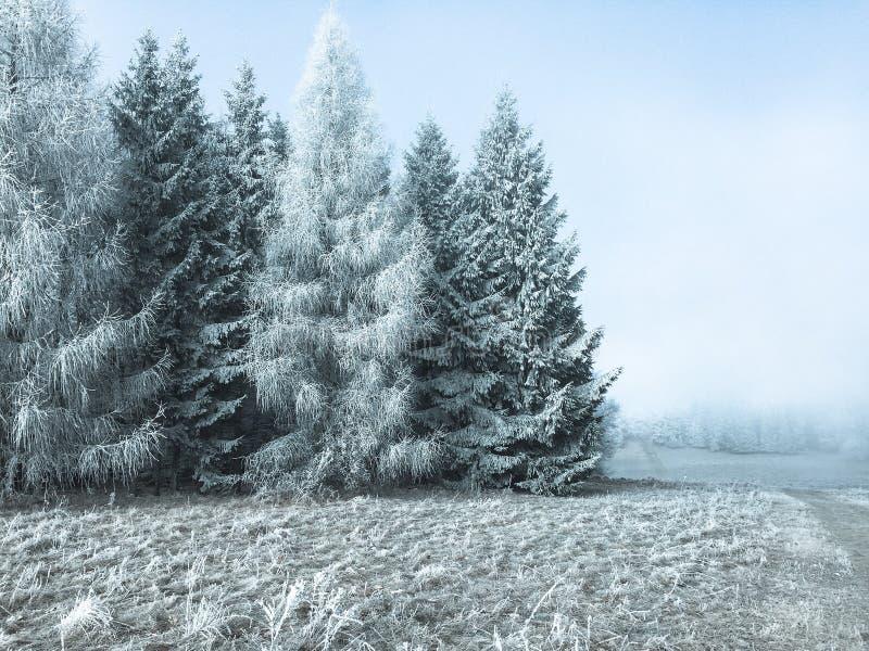 Grote bomen op de rand van een bevroren bos royalty-vrije stock foto's