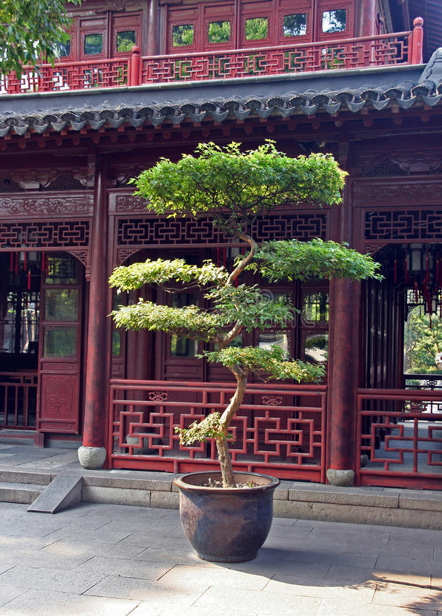 Grote bonsaiboom in Yuyuan-tuinen, Shanghai, China royalty-vrije stock foto