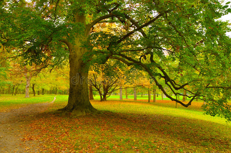 Grote boom stock afbeelding