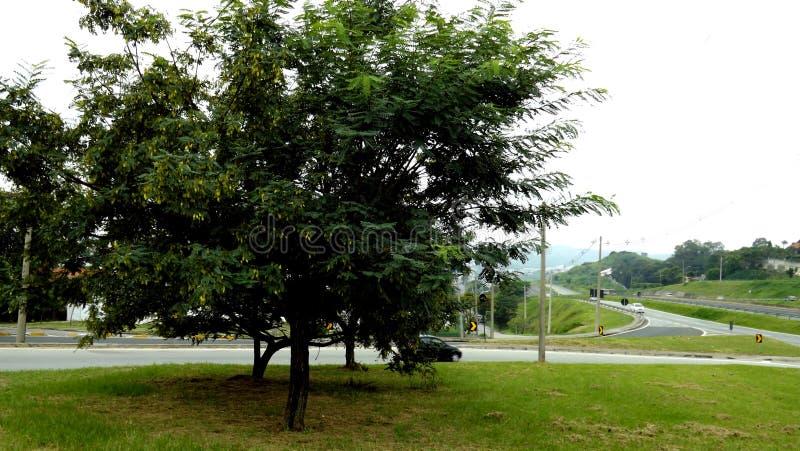 Grote boom dichtbij de weg royalty-vrije stock afbeeldingen