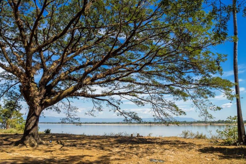 Grote boom in een klein dorp dichtbij Nakasong-eilanden in Laos royalty-vrije stock foto's