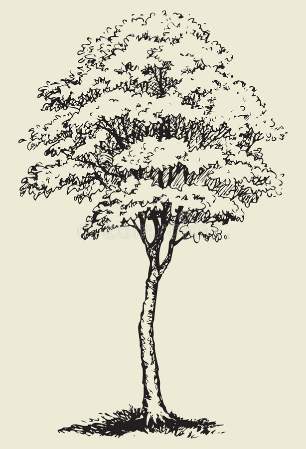 Grote boom EPS 10 royalty-vrije illustratie