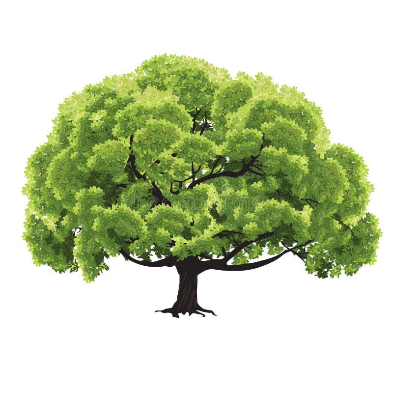 Grote boom met groen gebladerte stock foto's