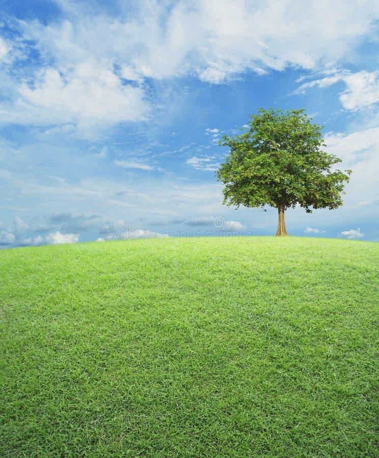 Grote boom met groen grasgebied over blauwe hemel royalty-vrije stock foto's