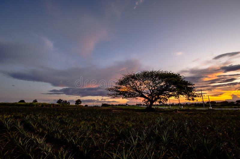 Grote boom onder zonsondergang royalty-vrije stock foto