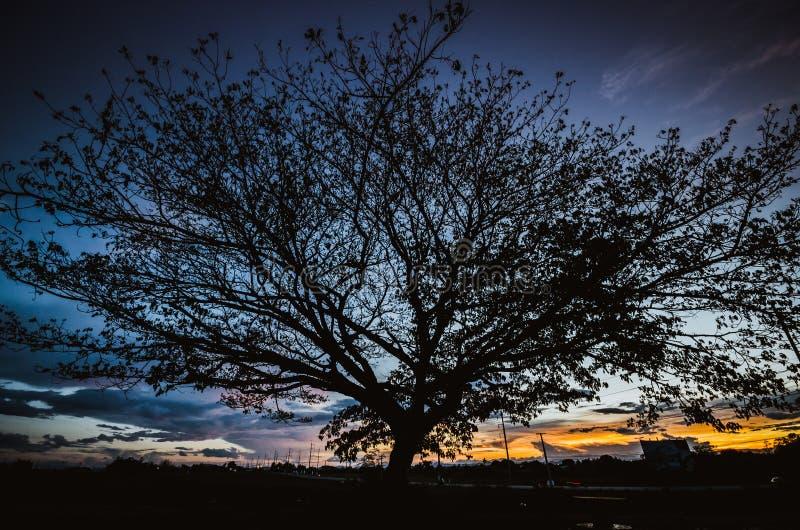 Grote boom onder zonsondergang stock afbeeldingen