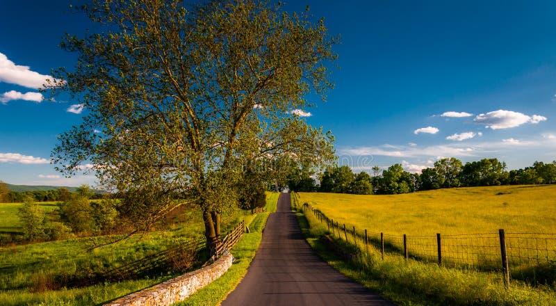 Grote boom op een weg door farmfields en rollende heuvels in het Nationale Slagveld van Antietam royalty-vrije stock foto