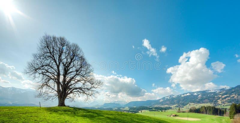 Grote boom op groene heuvel, blauwe hemel, wolken en bergen royalty-vrije stock afbeelding