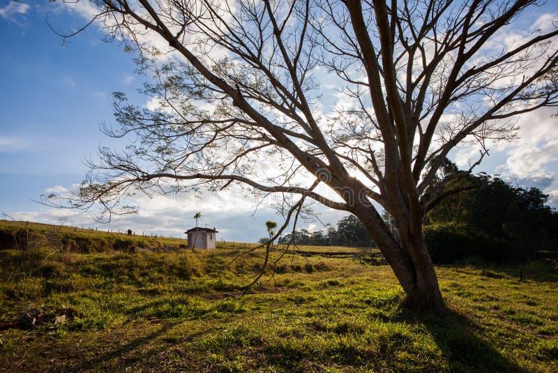Grote boom op plattelandsgebied - Breed hoek achterlicht stock foto