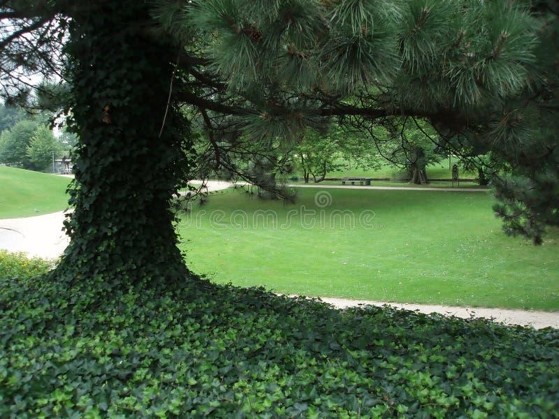Grote boom in park stock foto's