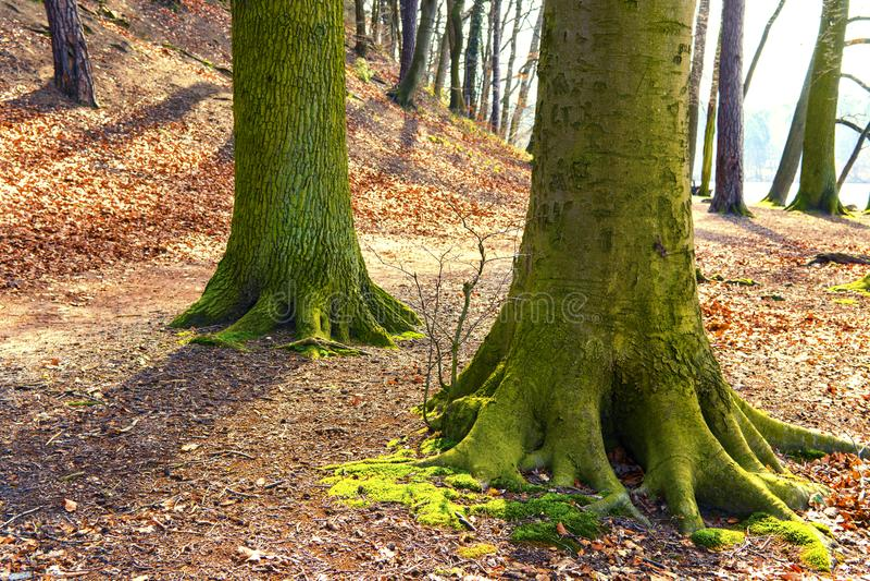 grote boomstam van boom in een parkhoogtepunt van oranje bladeren royalty-vrije stock foto's