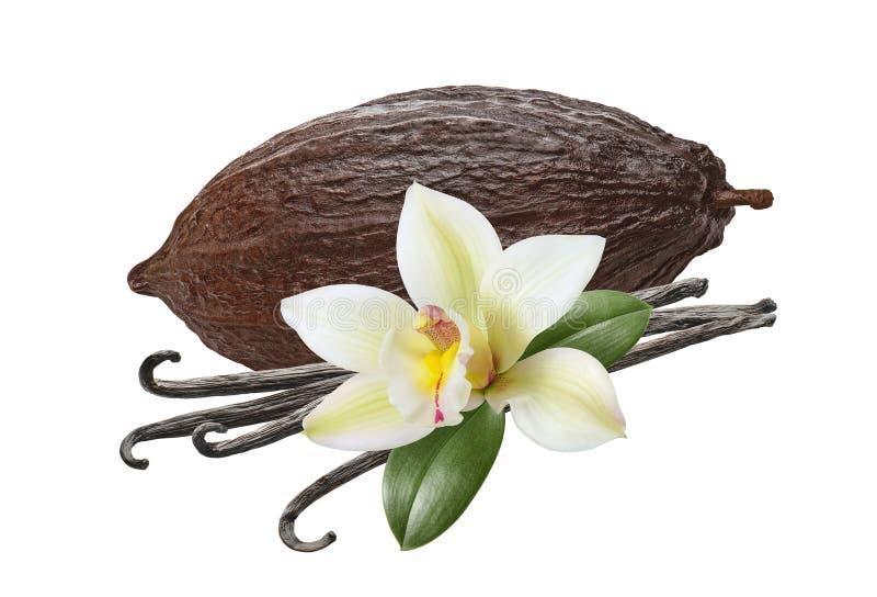 Grote cacaopaap en vanillabonen, geïsoleerd op witte achtergrond stock foto's