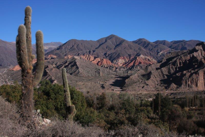 Grote cactus en bergen van Pucara royalty-vrije stock fotografie