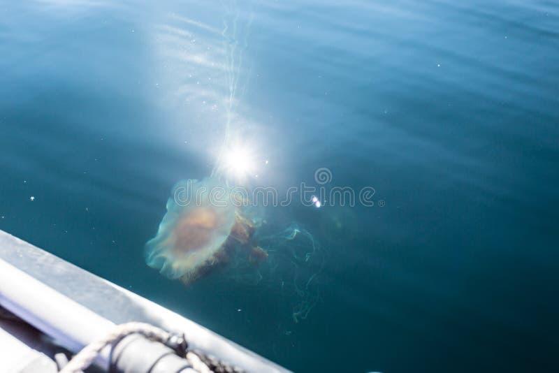 Grote capillata van kwallencyanea dichtbij boot in de diepe blauwe Barentsz Zee, Noordpooloceaan stock fotografie