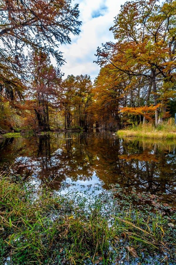 Grote Cipresbomen met Overweldigende Dalingskleur royalty-vrije stock foto