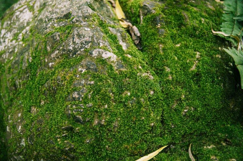 Grote die steen met groen mos wordt behandeld royalty-vrije stock fotografie