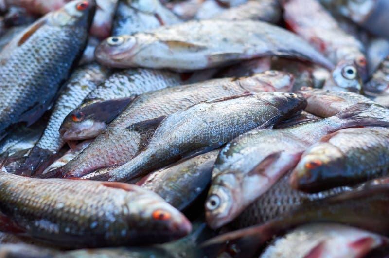 Grote die vangst van vissen in stapel worden opgestapeld royalty-vrije stock fotografie