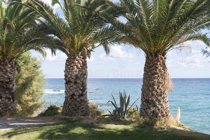 Grote, dikke palmen op het strand stock afbeeldingen