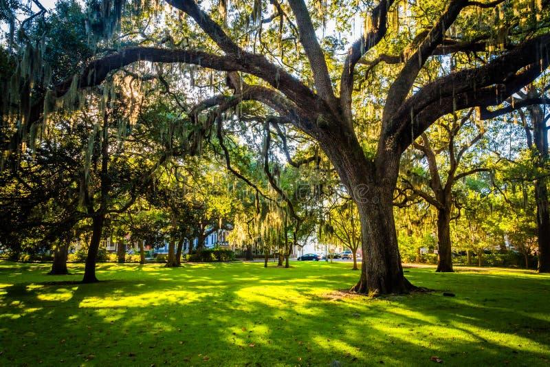 Grote eiken bomen en Spaans mos in Forsyth-Park, Savanne, Geor stock fotografie
