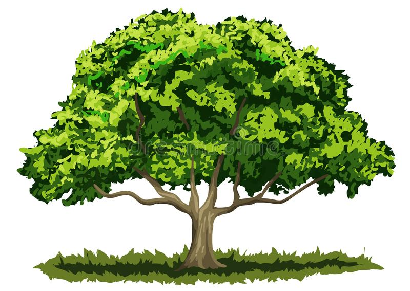 Grote eiken boom royalty-vrije stock afbeeldingen