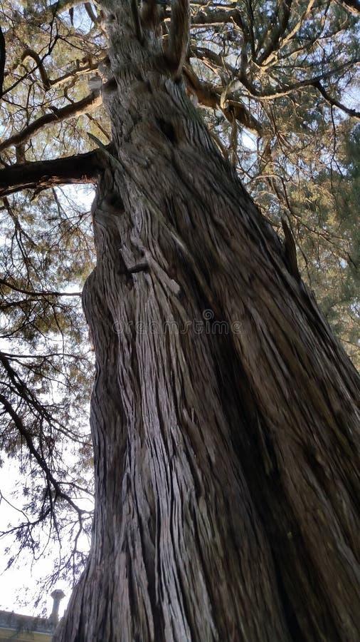 Grote en lange boom stock afbeeldingen