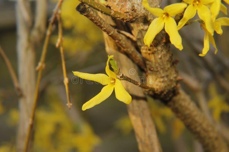 Grote Gele Bloem! stock afbeeldingen