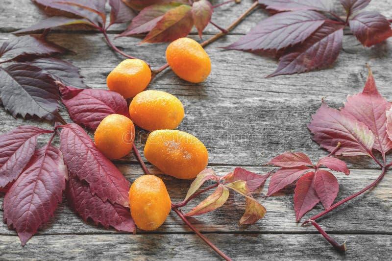 Grote gele droge zoete verlaat kumquats met mooi de herfstrood close-up stock fotografie