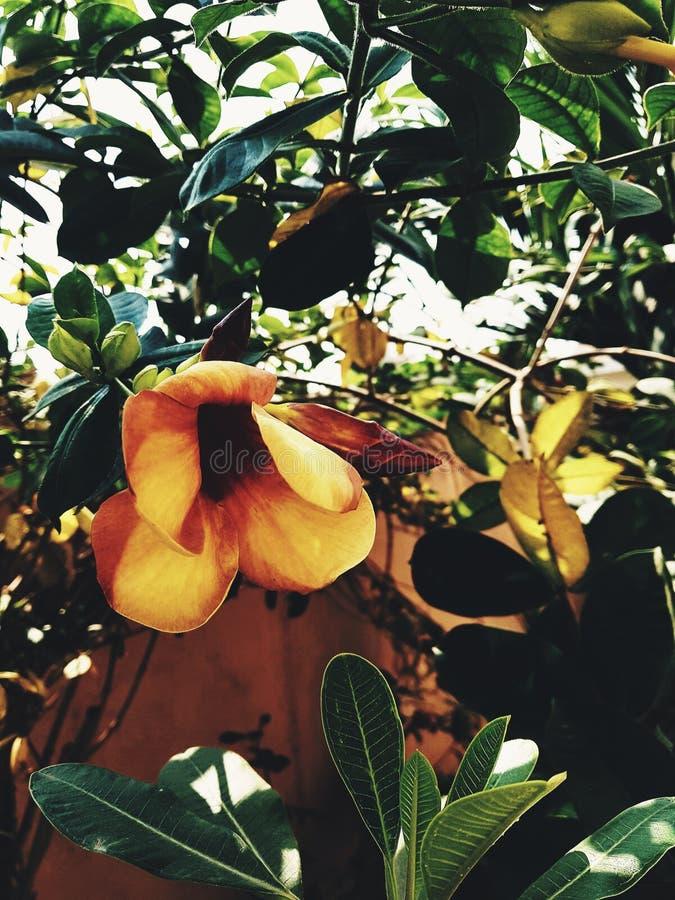 Grote gele gekleurde bloem met groene bladeren stock afbeeldingen