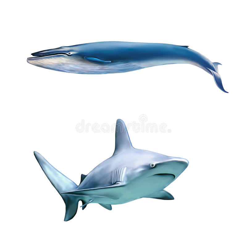 Grote grijze ertsaderhaai en blauwe wale vector illustratie