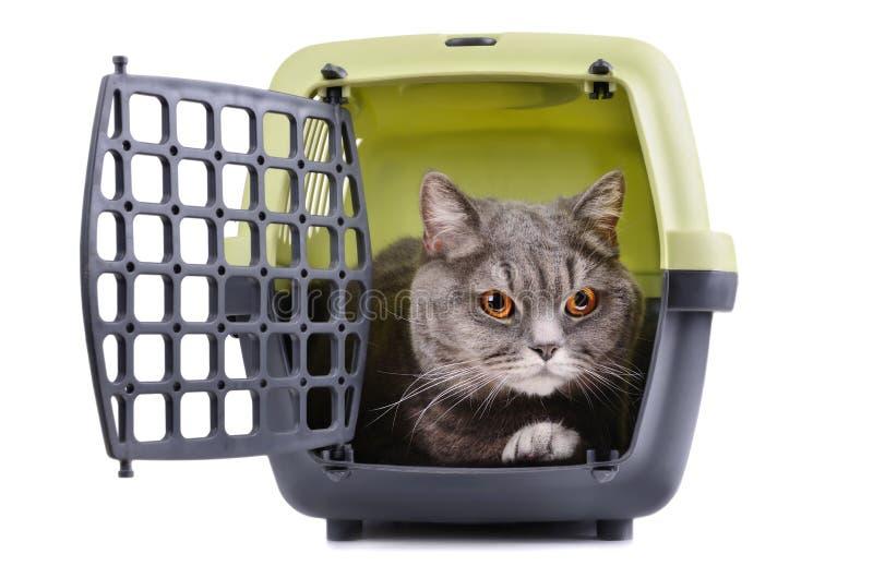 Grote grijze kat stock foto