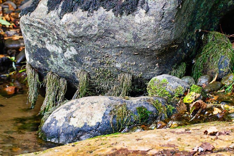 Grote grijze steen in vijver het groeien mos in de zomer stock foto's