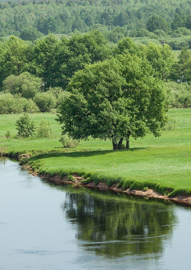 Grote groene boom op riverbank royalty-vrije stock afbeelding