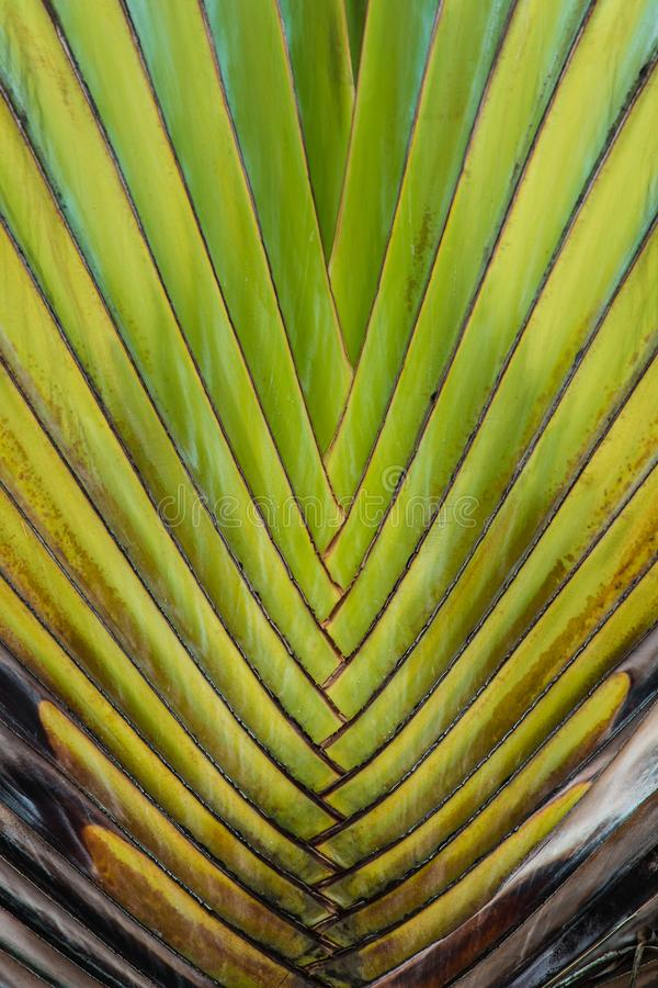 Grote groene het bladclose-up van de kleureninstallatie stock foto's