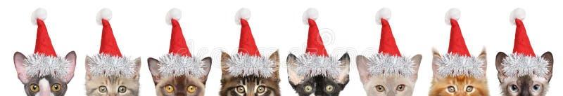 Grote groep katjes helft-gezicht in Kerstman rode hoeden royalty-vrije stock foto's