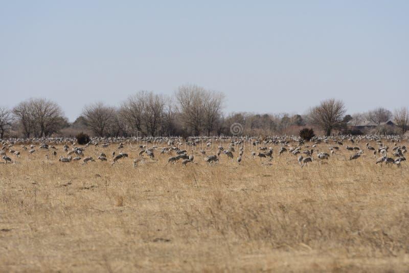 Grote Groep Kranen op een Landbouwbedrijfgebied royalty-vrije stock foto