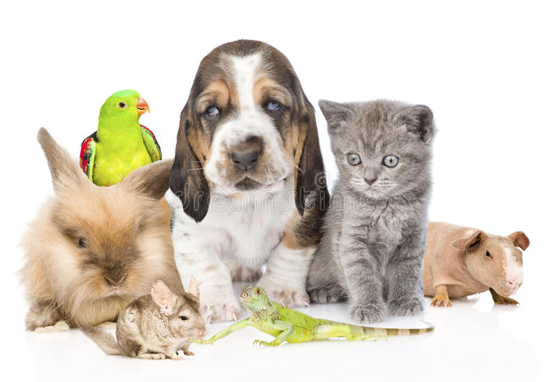 Grote groep leuke huisdieren Geïsoleerdj op witte achtergrond stock afbeelding