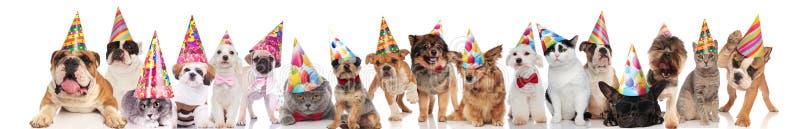 Grote groep partij huisdieren van verschillende rassen royalty-vrije stock afbeeldingen