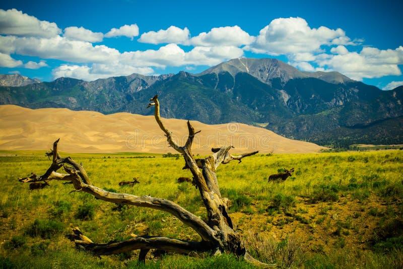 Grote het Park Wilde Elanden van Zandduinen Nationale Kruising royalty-vrije stock foto