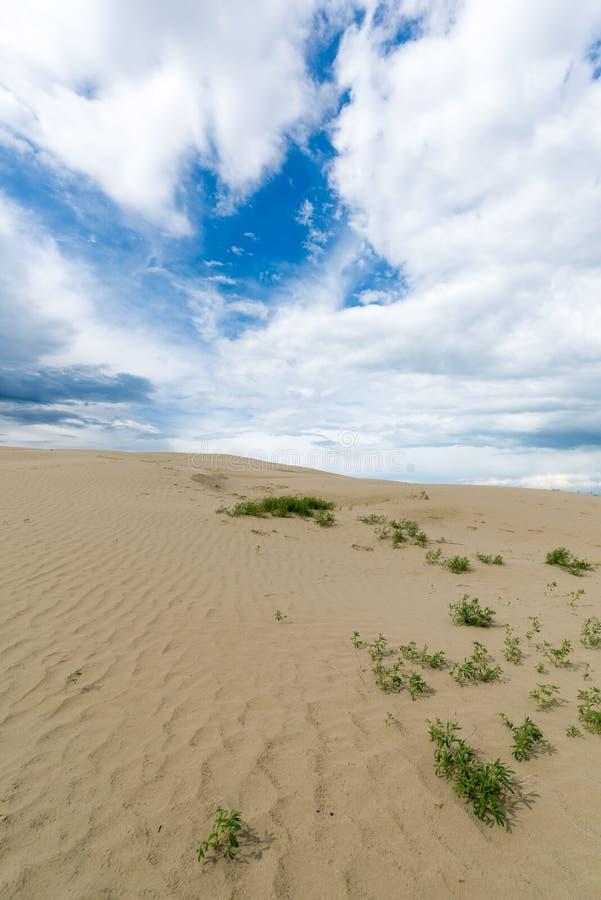 Grote het Zandduinen van Saskatchewan stock foto's