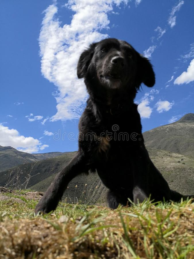 Grote Hond stock foto's