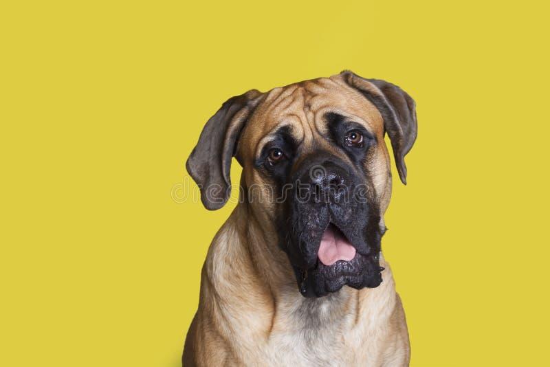 Grote hond stock afbeeldingen