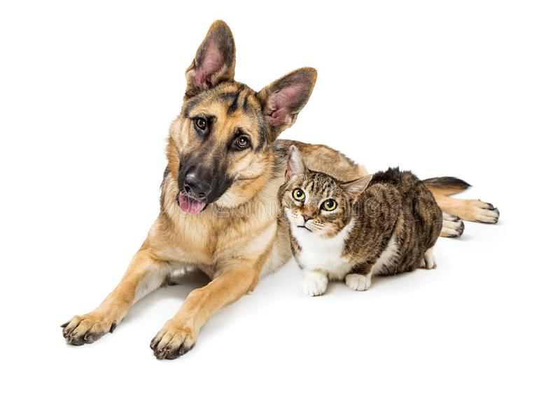 Grote Hond en Cat Lying Together Over White stock fotografie