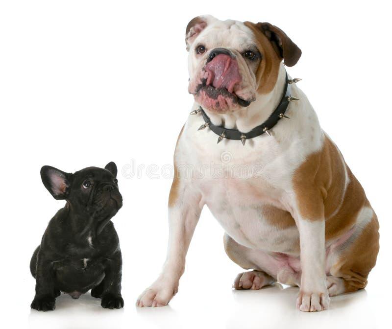 Grote hond kleine hond stock fotografie